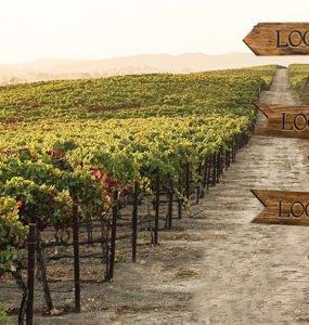 cherry-pie-vineyards